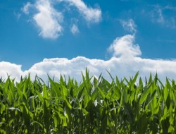 Agriculture Farming Quiz-3 : Test Your Knowledge