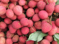 Lychee: Test Your Kowledge