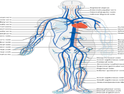 Human Body System Quizlet : 10 Quick Questions