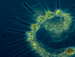 Biology Quiz on Living Organisms : 10 Multiple Choice Questions