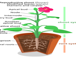 10 Quick Quiz on Plants and Plant Systems : Multiple Choice Questions