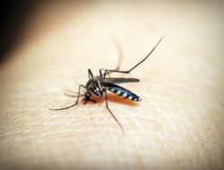 Quiz on Malaria : Test Your Knowledge !